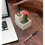 Kikkerland Concrete Desktop Planter - Small (PL02-S) - With Cactus